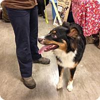 Adopt A Pet :: Skler - Bellingham, WA
