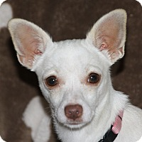 Adopt A Pet :: Pearl - Edmonton, AB