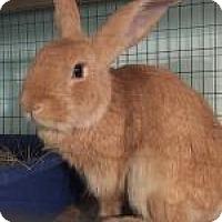 Adopt A Pet :: Henry - Woburn, MA