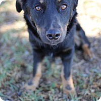 Adopt A Pet :: Crestline - San Diego, CA