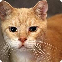 Adopt A Pet :: Andy - Sarasota, FL