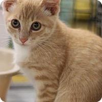 Adopt A Pet :: Jagger - Sacramento, CA