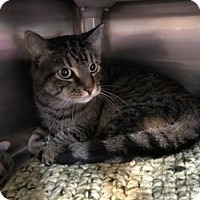 Adopt A Pet :: Milo - Middletown, CT