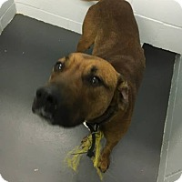 Adopt A Pet :: Bishop - Stanton, MI