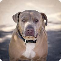 Adopt A Pet :: Sofia - Berkeley, CA