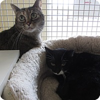 Adopt A Pet :: Snickers and Mystic - Kingston, WA