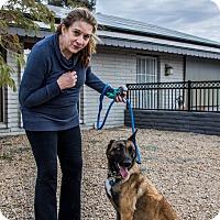 Adopt A Pet :: Kendra - Phoenix, AZ