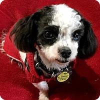 Adopt A Pet :: Greg Gutfeld - Euless, TX