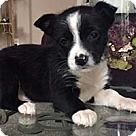Adopt A Pet :: Seven Dwarfs Grumpy