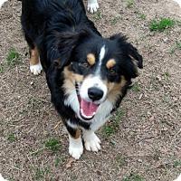 Adopt A Pet :: Pancho - Malakoff, TX