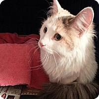 Adopt A Pet :: Paige - St. Louis, MO