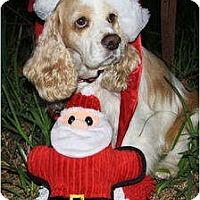 Adopt A Pet :: Wilson - Sugarland, TX