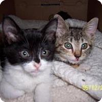 Adopt A Pet :: Shirley Maxine & Lala - Island Park, NY