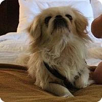 Adopt A Pet :: Connor - Chantilly, VA