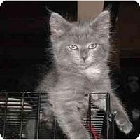 Adopt A Pet :: Kinsey - Irvine, CA