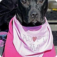 Adopt A Pet :: Isis - Woodbridge, CT