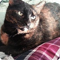 Domestic Shorthair Cat for adoption in Burlington, Ontario - Sydney & Coco