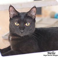 Adopt A Pet :: Mellie - Knoxville, TN