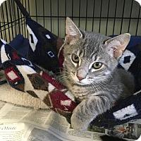Adopt A Pet :: Revis - Island Park, NY