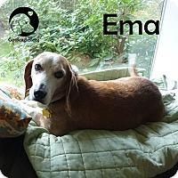 Adopt A Pet :: Emma - Pittsburgh, PA