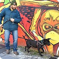 Adopt A Pet :: Egon Spengler - Jersey City, NJ