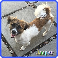 Adopt A Pet :: Jasper - Hollywood, FL