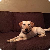 Adopt A Pet :: Ophelia - New Oxford, PA