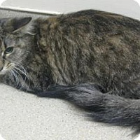 Adopt A Pet :: Momma - Gary, IN