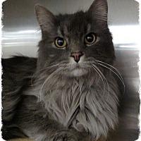 Adopt A Pet :: Abraham - Pueblo West, CO