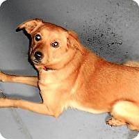 Adopt A Pet :: Daisy - Schaumburg, IL