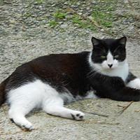 Adopt A Pet :: Dante - Bonita Springs, FL