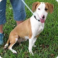 Adopt A Pet :: Freedom-LS - Orlando, FL