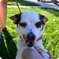 Adopt A Pet :: Joleen - Meridian, ID