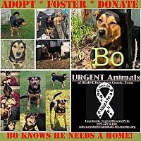 Adopt A Pet :: Bo - Hearne, TX