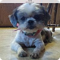 Adopt A Pet :: Paisley - LEXINGTON, KY