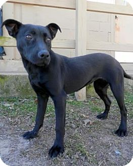 Terrier (Unknown Type, Small) Mix Dog for adoption in Tyler, Texas - Cinder