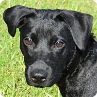 Adopt A Pet :: Ember - Englewood, FL