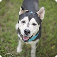 Adopt A Pet :: Domino - Houston, TX