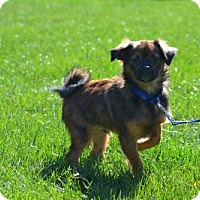 Adopt A Pet :: Perry - Fairfield, OH