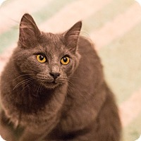 Adopt A Pet :: Sebastian - Morgantown, WV
