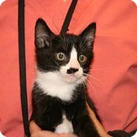 Adopt A Pet :: Patch - Wildomar, CA