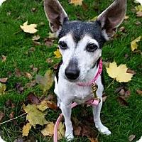 Adopt A Pet :: Shirley - Pontiac, MI