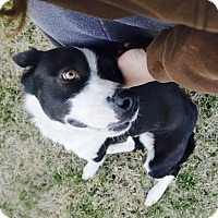 Dog Rescue Lebanon Tn
