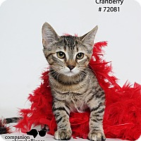 Adopt A Pet :: Cranberry  (Foster Care) - Baton Rouge, LA