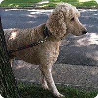 Adopt A Pet :: Luke - Bridgewater, NJ