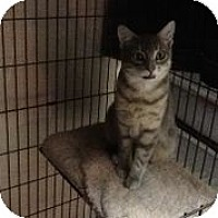 Adopt A Pet :: Sheldon - bloomfield, NJ