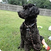 Adopt A Pet :: Mr. Timmy - Marlton, NJ