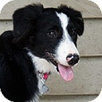 Adopt A Pet :: Polly - Savannah, GA