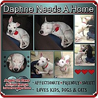 Adopt A Pet :: Daphne - Northfield, NJ