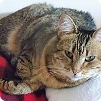 Adopt A Pet :: Jasper - Riverhead, NY